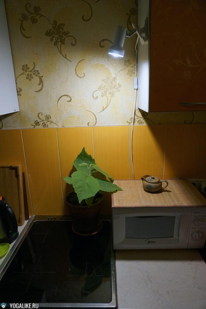 Киви вполне хватает света для роста: метр до 4-х Вт светодиодной лампочки, 2700 К.